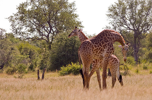 Ian and I Visit KNP (21 Photographs)