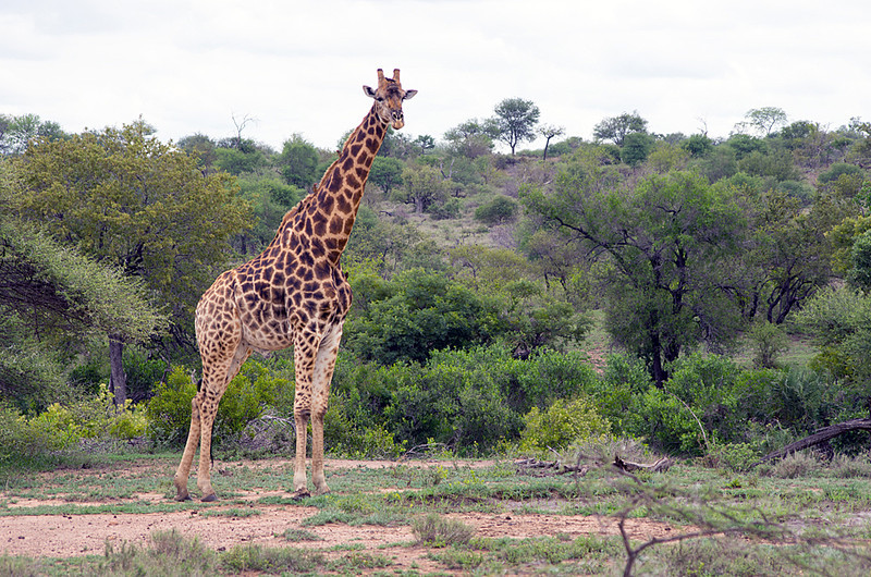 Second Trip to Kruger