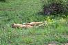 Kruger Park Trip Two