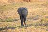 Elephant_MalaMala_2016_0015