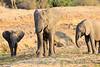 Elephant_MalaMala_2016_0010