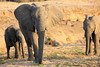 Elephant_MalaMala_2016_0011