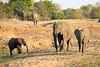 Elephant_MalaMala_2016_0006