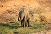 Elephant_MalaMala_2016_0002
