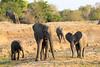 Elephant_MalaMala_2016_0008