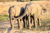 Elephant_MalaMala_2016_0020