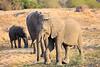 Elephant_MalaMala_2016_0013