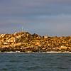 Seal Island. Lots of shark food here.