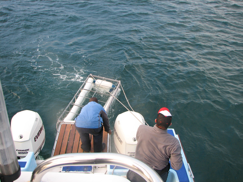 Arriving at Seal Island and throwing the cage in the water
