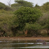 Hippos, Birds, Croc, a great start to a beautiful day