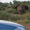 As he walked right past our parked car we wondered if we were insured for elephant damage...