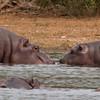 Hippo Kiss