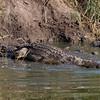 Ntandanyathi Hide Croc.  A bit after we heard a big splash and the crunching of bones...
