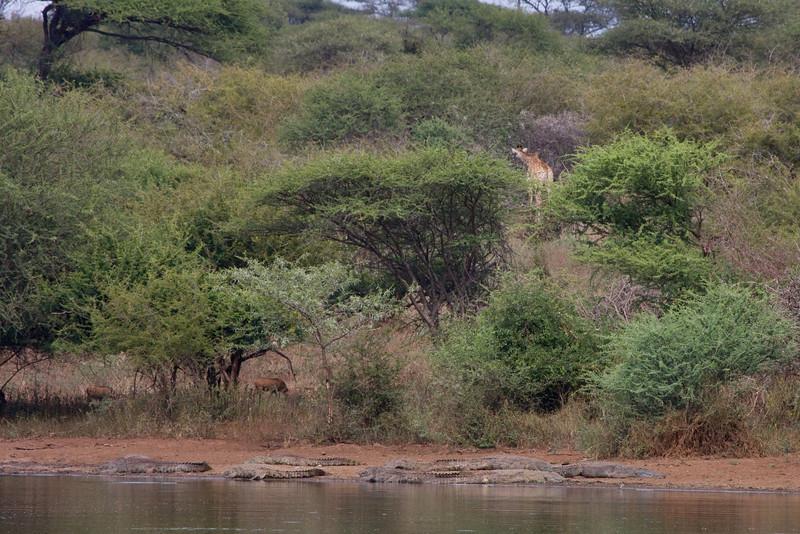 Lots of crocs, warthogs, giraffe