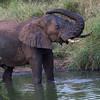 Ntandanyathi Hide : elephant bathing