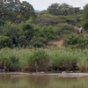 Hippos and Giraffe at Lower Sabie.  This was so amazing, so much going on.    I was taking so many photos here Yannick asked me if I was going to ever sit down and eat my lunch.  Wow.