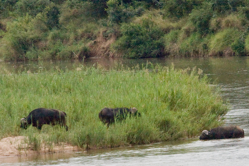 And some buffalo crossing the river to the left...