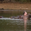 Sunset viewpoint and playful Hippos