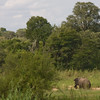 Elephant seen from camp porch