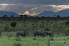 A crash of rhinos at sunset and the Drakensberg Mountains-2, Ngala, South Africa