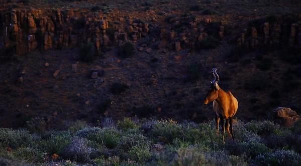 South Africa Landscapes
