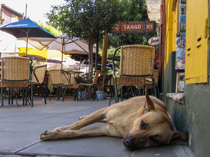 Dog, La Boca.