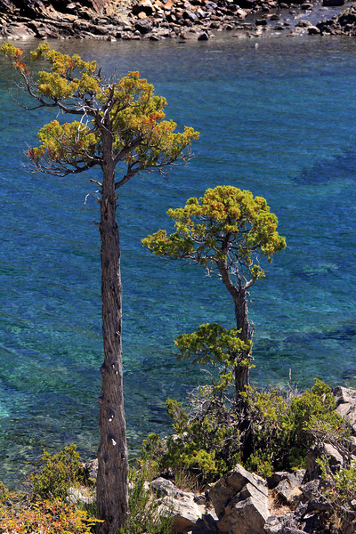 Old Cedars, Bahia Lopez