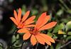 Wild Flowers, Late Summer, Cerro Llao Llao
