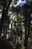 Forest Park, Bariloche