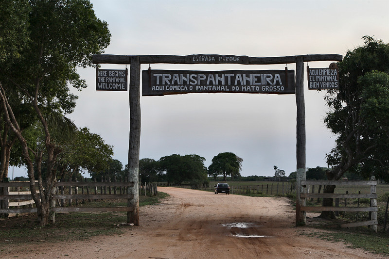 The Transpantaneira, also known as MT-060, is a road that crosses the pantanal, in the state of Mato Grosso in Brazil. The road is a link between the city of Poconé and the place of Porto Jofre. It is 147 km long and crosses no less than 122 wooden bridges, several of which were impassable so we had to go around them. Not such a probem in the dry months, but impossible during rain season.