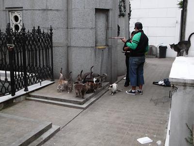 Feeding the cemetary cats