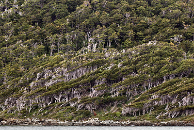 The tip end of South America, Cape Horn, is the windiest place on earth.  The wind blows so hard that it bends and shapes the trees on the hillsides.