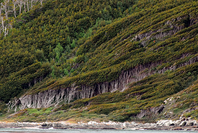 The wind has blown and shaped these trees near Cape Horn.