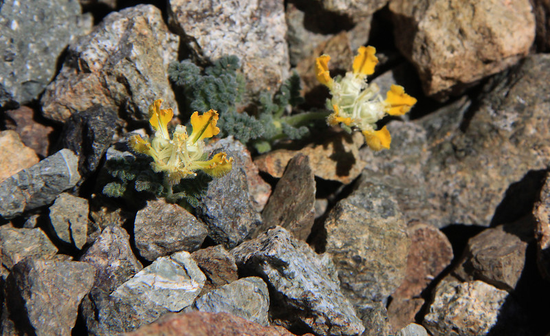 Flowering Plants growing near Summit