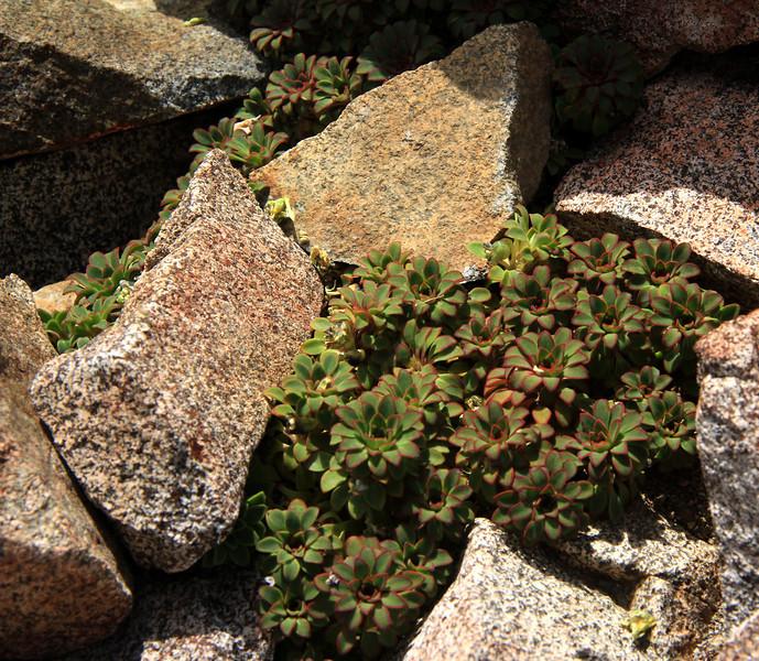 Cerro Catedral - Succulents