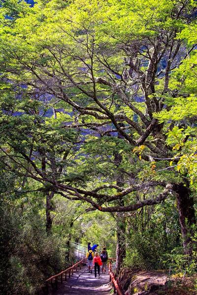The Rio Petrohué Falls Trail