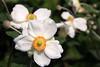 Full Summer Bloom