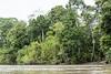 Dense vegetation along the river bank