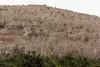 Palo Santo (Bursera graveolens) trees