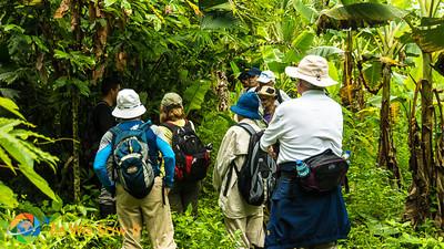Amazon Island Hike
