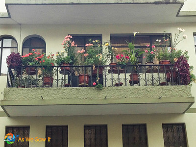 Flower basket with full blooms brighten any balcony, like this one with a Cana Lily.