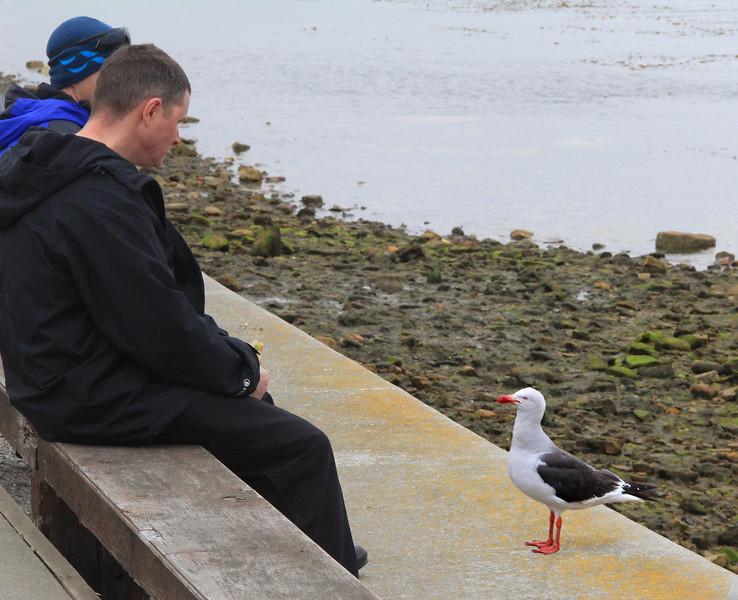Stanley, Falklands 03-01-13 (34)