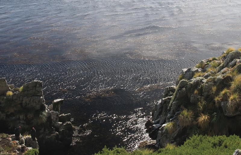 Gypsy Cove, Falklands 03-01-13 (160