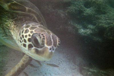 sea_turtle_2.jpg