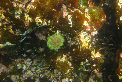 Colorful Sea Urchin