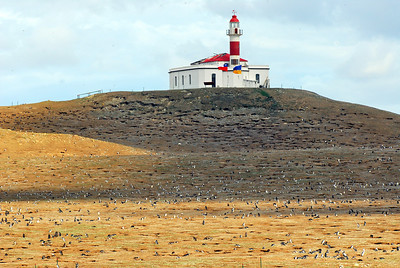 A few of the 300,000 penguins on the island dot the landscape.  The light house is unmanned and part of it was burned in a recent fire.