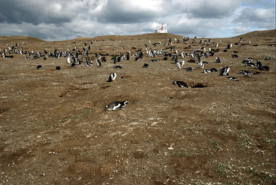 MagIsland&Penguines