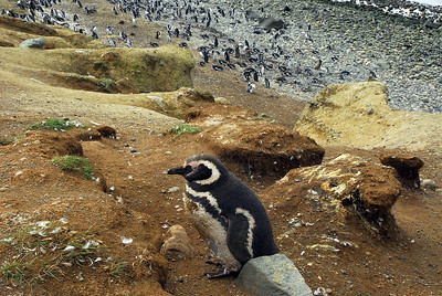 PenguineHighUp