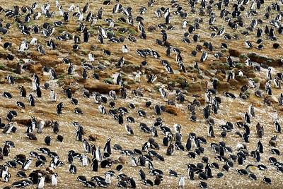 Penguines3