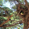 Wild Parrots Nesting in Old Town